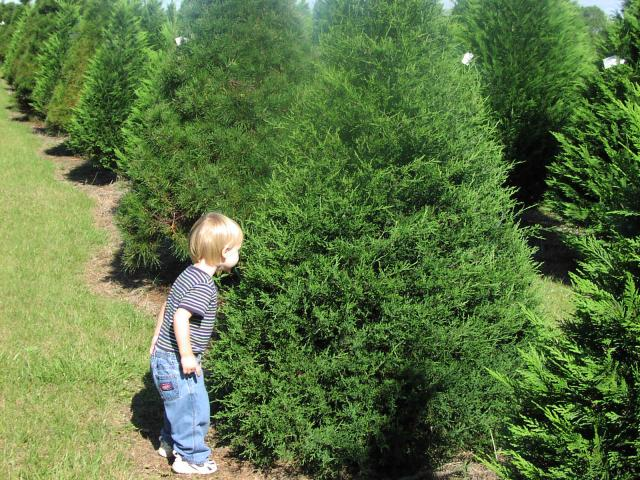 Christmas Tree Growers | Visit Our Louisiana Christmas Tree Farm
