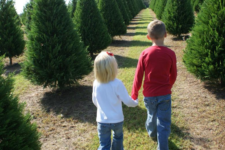 so visit our christmas tree farm in louisiana to get you the real thing then you and your family can enjoy the sight the smell the touch and the whole - Christmas Tree Farm Louisiana