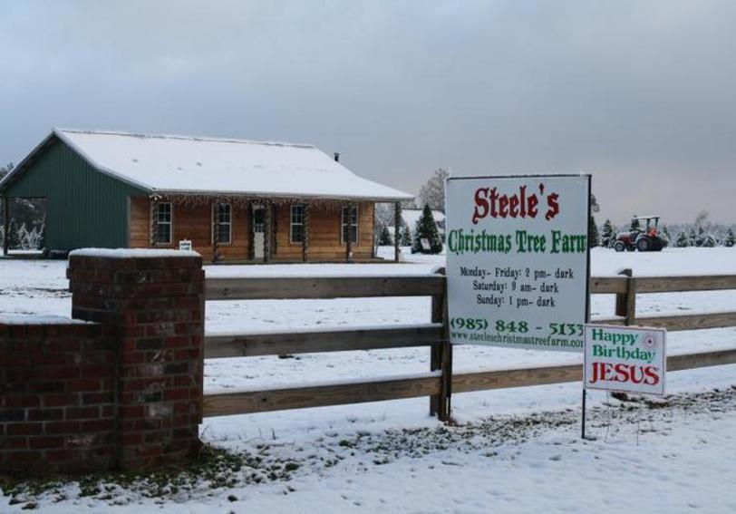 return to top of page - Christmas Tree Farm Louisiana